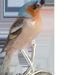 Finch Slider NR 06